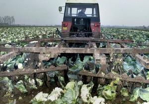 Кабмин намерен выделить на развитие овощеводства почти 31 млрд гривен
