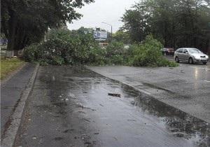 В киевском парке на двух женщин упало дерево