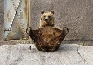 В Финляндии проживает медведица-йог