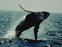 Ученые раскрыли секрет сна китов