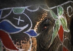 В Киевский зоопарк привезут слона со Шри-Ланки