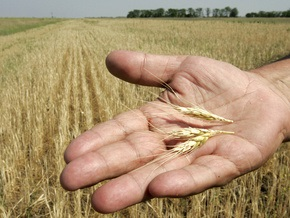 Минагрополитики прогнозирует сбор зерновых в объеме 42-43 млн тонн