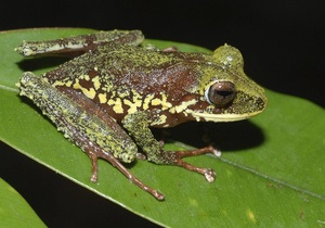 В Юго-Восточной Азии и Океании обнаружили более сотни  новых видов животных