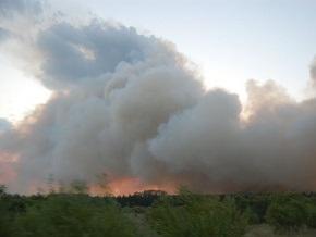В Днепропетровской области вспыхнул лесной пожар