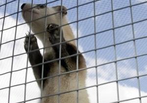 В центре Читы поймали хорька, сбежавшего накануне из цирка