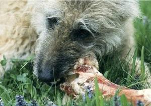 Би-би-си: Почему собаки обожают грызть кости?