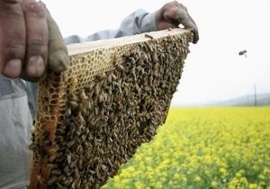 В США начали производить конфеты с начинкой из насекомых