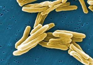 Ученые: Бактерии объединяются для борьбы с другими микробами