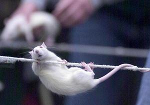 Стволовые клетки излечивают эпилепсию у мышей