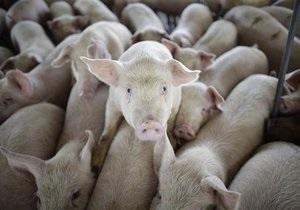 Скандал вокруг пандемии свиного гриппа: ВОЗ отвергла обвинения