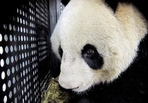 В Китае умерла самая старая панда в мире
