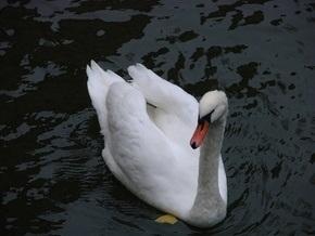 В зоопарке Екатеринбурга лебедь и эму будут бороться за звание лучшей самки
