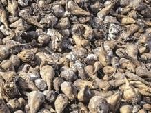 На сахарном заводе во Львовской области обнаружили боеприпасы