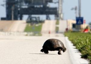 В Миннесоте водителей попросили уступать дорогу черепахам