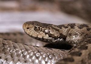 Осторожно, змеи! МЧС Украины выпустило рекомендации по первой медпомощи
