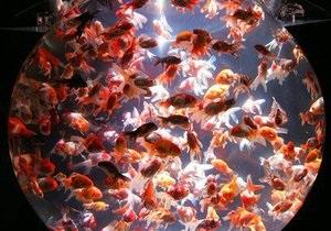 Исследование: Из-за наркотиков и лекарств рыбы становятся гермафродитами