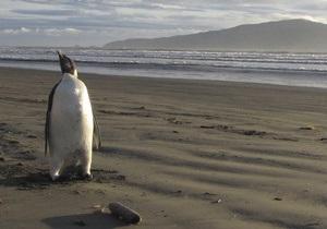 В Японии спустя 2,5 месяца поймали сбежавшего пингвина