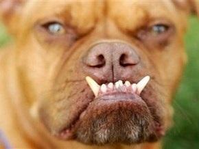 На конкурсе в Калифорнии выбрали самую уродливую собаку