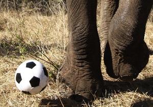 Ученые обнаружили у слона шестой палец