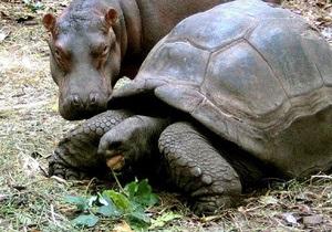 Фотогалерея: Нашли друг друга. Дружба в мире животных