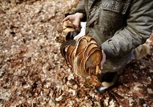 В Италии за последние двое суток погибли шестеро грибников