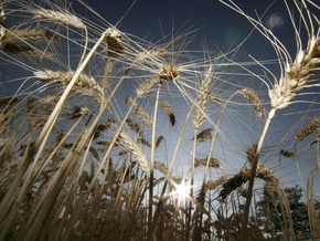 Украина выделит землю для выращивания зерна для нужд стран Африки