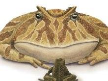 Обнаружена гигантская лягушка, питавшаяся динозаврами