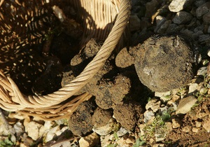 СМИ: В лесах Киевской области распылили яд, грибы не рекомендуют собирать в течение 20-ти дней