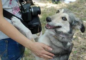 Фонд Ахметова намерен сократить число бездомных животных в Донецке гуманными способами
