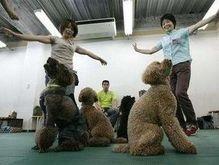 В Японии собаки берут уроки танцев