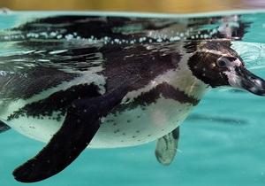 В Австралии из парка морской жизни похитили пингвина
