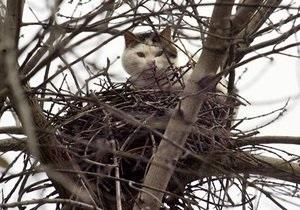 Киевские спасатели сняли с дерева кота, который мешал проводить экскурсии в Лавре