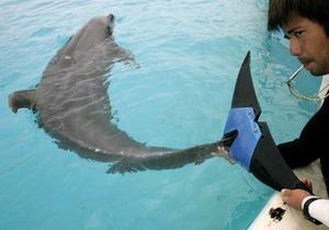 В Украине запретили вылов дельфинов