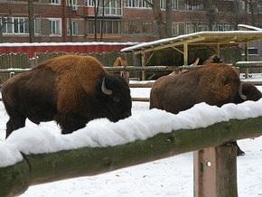Киевский зоопарк придумал еще одну платную услугу
