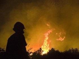 Во Львовской области сгорело более 40 гектаров пшеницы