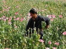 В 2007 году Афганистан продал опиума на миллиард долларов