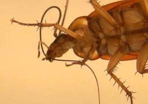 Биологи раскрыли секрет гигиены насекомых