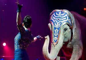 По деловому центру Цюриха целый час бродил цирковой слон