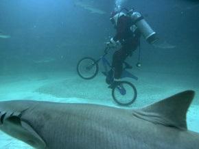 The Times вспомнила десять самых странных находок в желудках акул