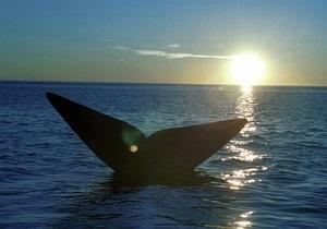 В Аргентине начинается сезон наблюдения за китами