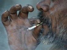 Жителей Нигера будут сажать в тюрьму за курение