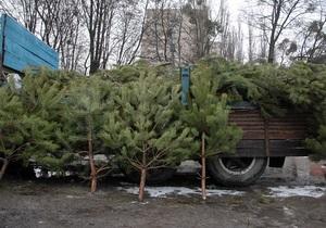 Не проданные елки пойдут на удобрение и утепление