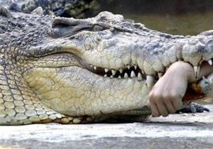 В Московском цирке крокодил укусил служащего