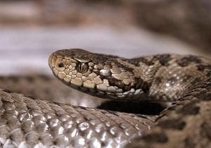 В Днепропетровске женщина поймала змею в пылесос