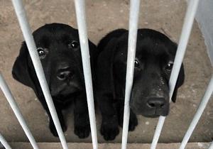 В Киеве провходит выставка охотничьих собак