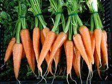 Ученые вывели сверхпитательную морковь