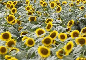Украина начала экспорт подсолнечного масла в Китай