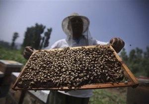 У британских ученых похитили несколько тысяч пчел