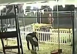 В США украденного козла вернули с розовым педикюром