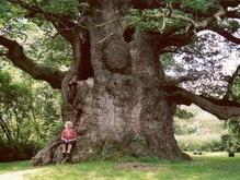 Семь киевских деревьев стали памятками